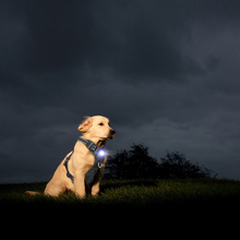 Glowing Safety high-end dog harness With Trade Assurance