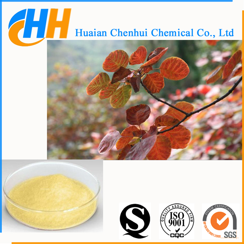 High Purity Natural Bulk Fisetin Powder 98% CAS No. 528-48-3