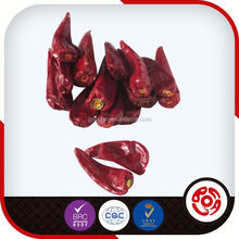 red small round hot chili pepper