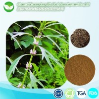 High quality 100% Natural 5:1 10:1 Motherwort Herb Extract Power