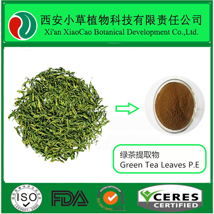 Factroy supply total polyphenols 50% water soluble egcg green tea powder plant extract
