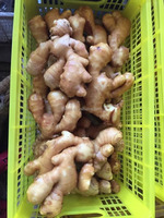 Market Prices For Ginger/Varieties Of Ginger With 30lb PVC Carton Pack