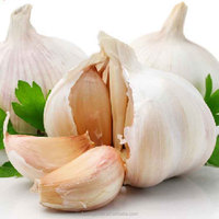 Fresh New Garlic Natural Garlic Chinese
