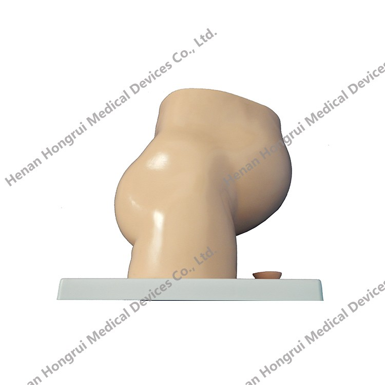 Classic Pregnancy Anatomical Model,Teaching Anatomical Female Pelvis Model