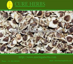 Elite moringa oleifera seeds for bulk