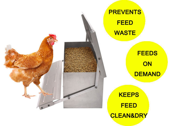 automatic pet feeder China cheap automatic chicken feeder