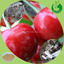 Fresh cherry powder with highest VC pure cherry powder in stock