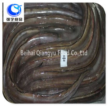 wholesale fishing frozen conger eel whole round