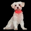 Whosale LED Nylon Charge Pet Collar