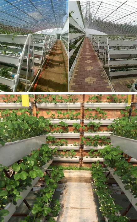 Agricultural Greenhouses used NFT hydroponic cultivation channel growing gutter