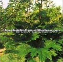ISO Certificated Manufacturer Emodin Rhubarb Extract