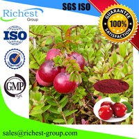 Cranberry Fruit Extract Powder Proanthocyanidins 5% 25% 50%
