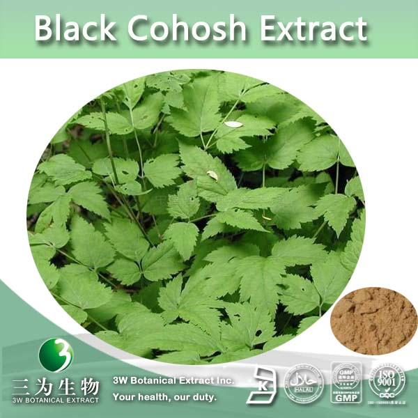 100% Natural Black Snakeroot Extract,Caulophyllum Thalictroides Extract,Cimicifuga Racemosa Extract