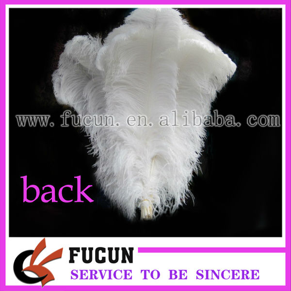 ostrich featherb.jpg