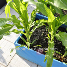 Supply roof corn planter planting bag garden planter