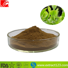 Paraguay Tea plant extract Yerba Mate Extract Powder
