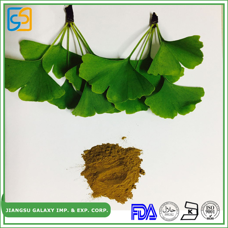 Professional factory herbal high quality extract of ginkgo biloba