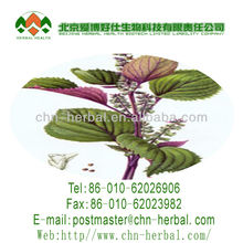 NutraMax Supply-Purple Perilla Extract/Purple Perilla Extract Powder/Natural Purple Perilla Extract