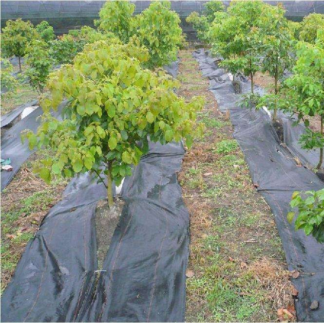 long lifespan weed barrier landscape fabric - Weed Barrier