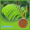 Mimosa extract mimosa with top quality