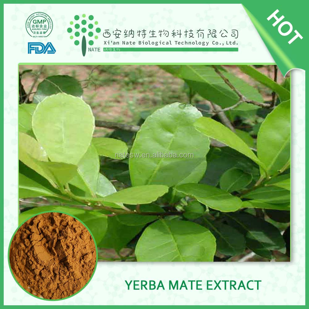 Pure natural Health food Yerba Mate Extract 25% polyphenol in bulk