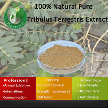 Tribulus Terrestris Total Saponins/Tribulus Terrestris L./100% Natural Pure Tribulus Terrestris Extract