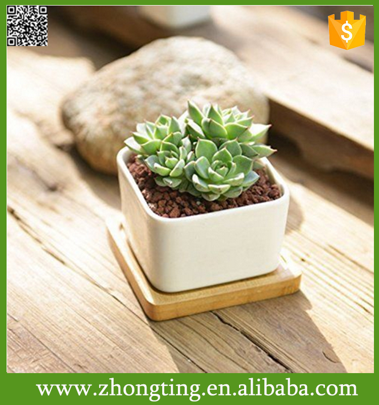Fashion decor White Succulent Planter Pot Container Bamboo Saucer mini ceramic flower pot yiwu