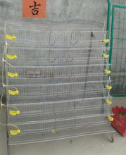 metal layer quail cages for sale