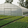 Baolida Single Span Green House