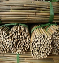 Wy-J126 Nature moso large bamboo poles