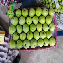 Wholesale types of green apples qinguan apple with high quality