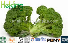 Brocoli Extract Betaine Beets broccoli spinach