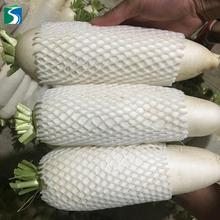 new season chinese fresh white radish