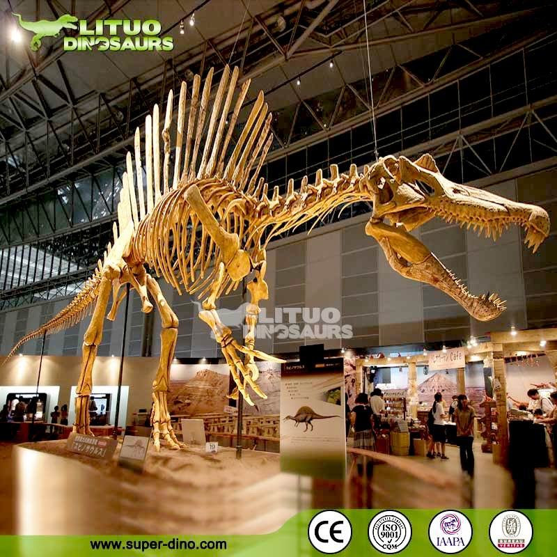 High Simulation Museum Skeleton Model Spinosaurus