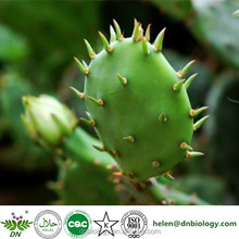 Natural Nopal Cactus Juice powder Prickly Pears Extract Opuntia ficus extract