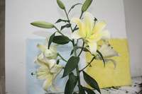 Most popular factory direct lily yellow king