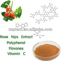 High Quality Natural Rose hip Extract herb medicine