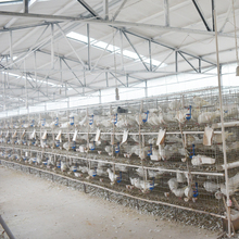 Stable quality racing pigeon breeding cage making