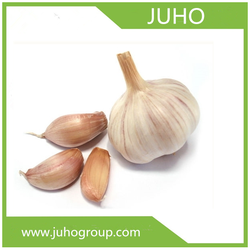 TYPE C502 Chinese fresh garlic for sale in bulk(USB 3.1)/quotation for garlic