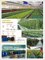 Commercial Greenhouse for Vegetable production