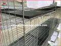 Professional Manufacture Breeding Pigeon Cage
