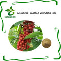 China Factory Provide Natural Schisandra Fruit Extract