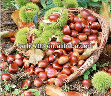 buy raw chestnut and China whole products you can import.