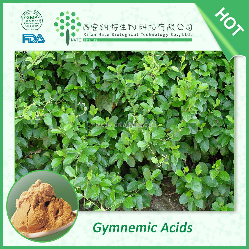 Herbal extract treatment of diabetic Gymnema Sylvestre Extract 25% Gymnemic Acids Powder
