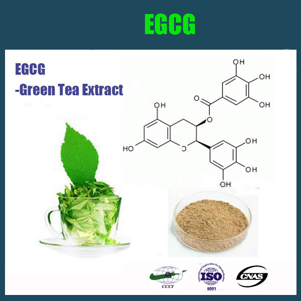 Hot sale Green Tea extract/Tea powder/EGCG/Catechin plant extract