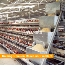 Automatic Pakistan Poultry Farm Feeding System for Chickens