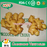 Fresh Ginger with 150g up and 23kg/mesh bag CNF Karachi Price