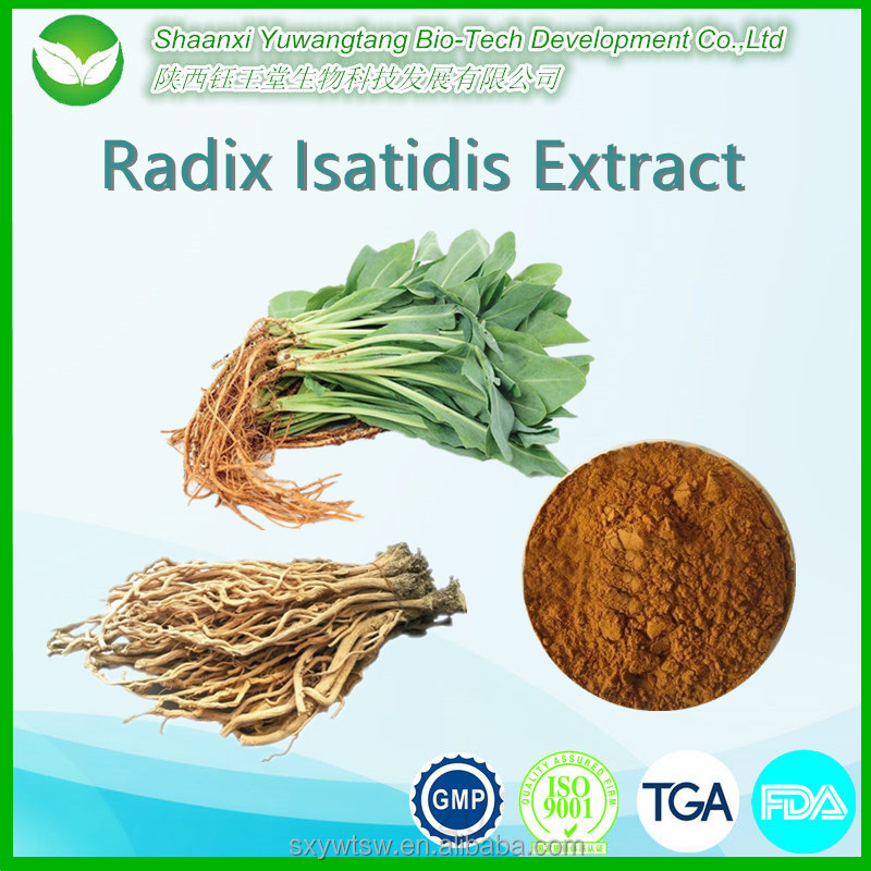 Best Antiviral Pure Natural Radix Isatidis P.E/ Indigowoad Root P.E. Extract