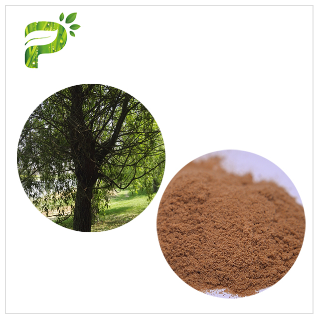 High and top quality 100% pure derived white willow bark plant extract