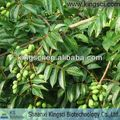 Chinese Supplier Natural Olive Leaf Extract Liquid KS-06